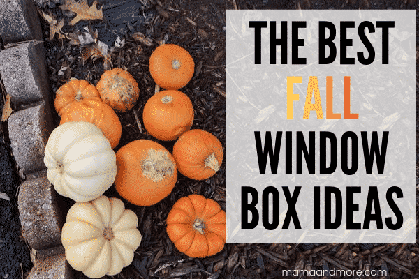 The Best Fall Window Box Ideas