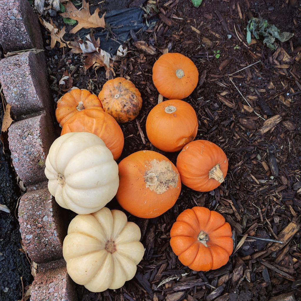 Decorate your window box for Fall!