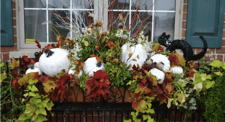 Best ideas to decorate your window box for Fall!