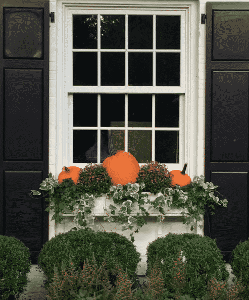 Make your window boxes beautiful for Fall!