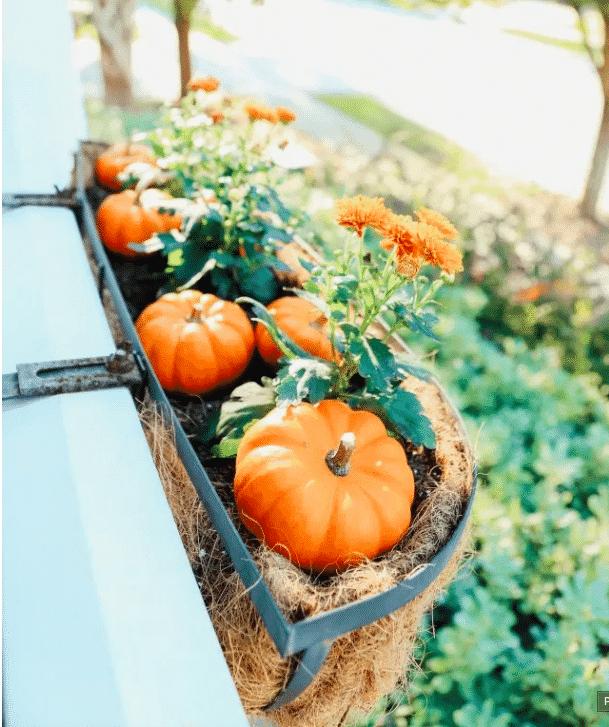 The best unique Fall window box ideas