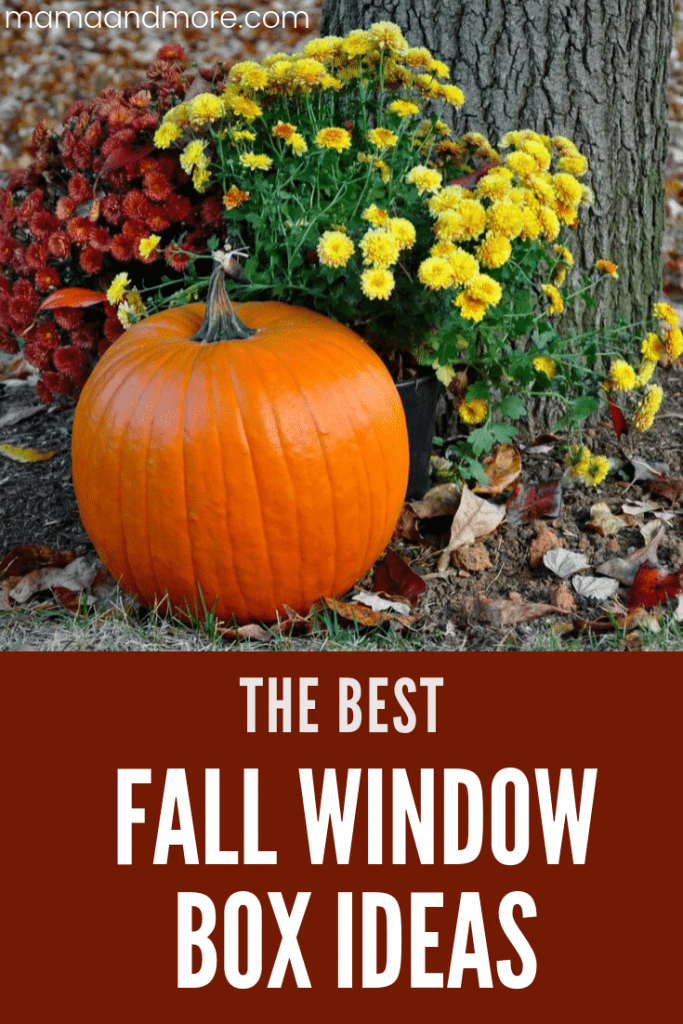 The best Fall window box ideas